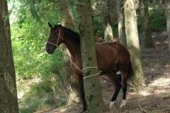 relax a cavallo centro equestre san giorgio cinigiano