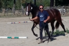 cavallo maremmano in gara