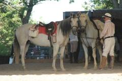 sosta dei cavalli