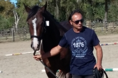 Cavallo razza maremmana