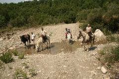 momenti di passeggiata a cavallo