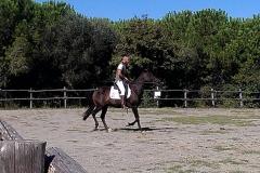 esibizioni Centro Equestre San Giorgio Cinigiano (GR)