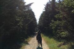 trekking a cavallo cinigiano Grosseto
