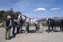 Esibizione a cavallo Centro San Giorgio Cinigiano (GR)