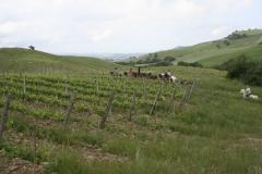 passeggiate a cavallo in Toscana
