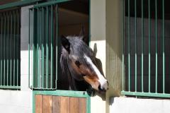 pensione cavalli a Cinigiano Grosseto