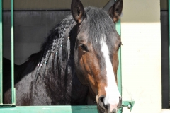 box per cavalli a Cinigiano Grosseto