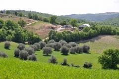 Centro Equestre San Giorgio Cinigiano (GR)