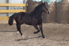 allevamento2_centro-equestre-cinigiano