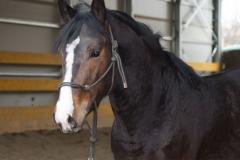 allevamento_centro-equestre-cinigiano