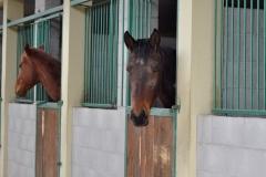pensione cavalli in box Cinigiano (GR)
