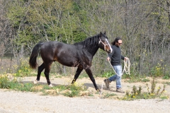 centro-equestere-cavallo-maremmano