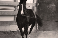 allevamento cavalli maremmani