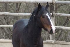 cinghialetto-centro-equestre-cinigiano