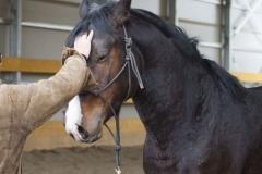 doma-centro-equestre-cinigiano