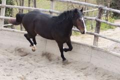 doma2-centro-equestre-cinigiano