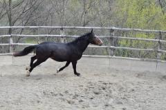 equestre-cinigiano