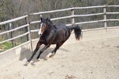 san-giorgio-cinigiano-cavalli