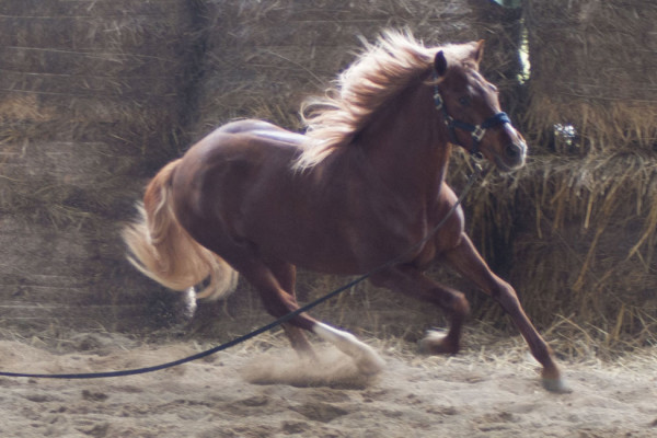 addestramento cavalli Grosseto