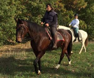 centreo-equestre-cinigiano