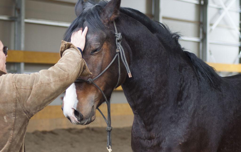 doma e addestramento Centro Equestre San Giorgio di Cinigiano