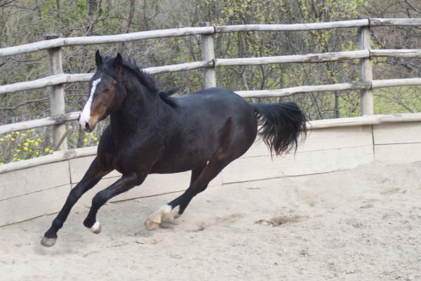 doma cavalli in provincia di grosseto