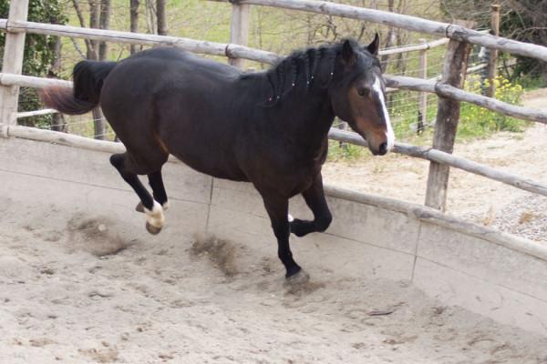 addestramento Centro Equestre San Giorgio di Cinigiano