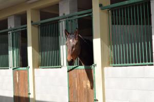 Centro Equestre San Giorgio Cinigiano
