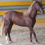 doma cavalli in Maremma