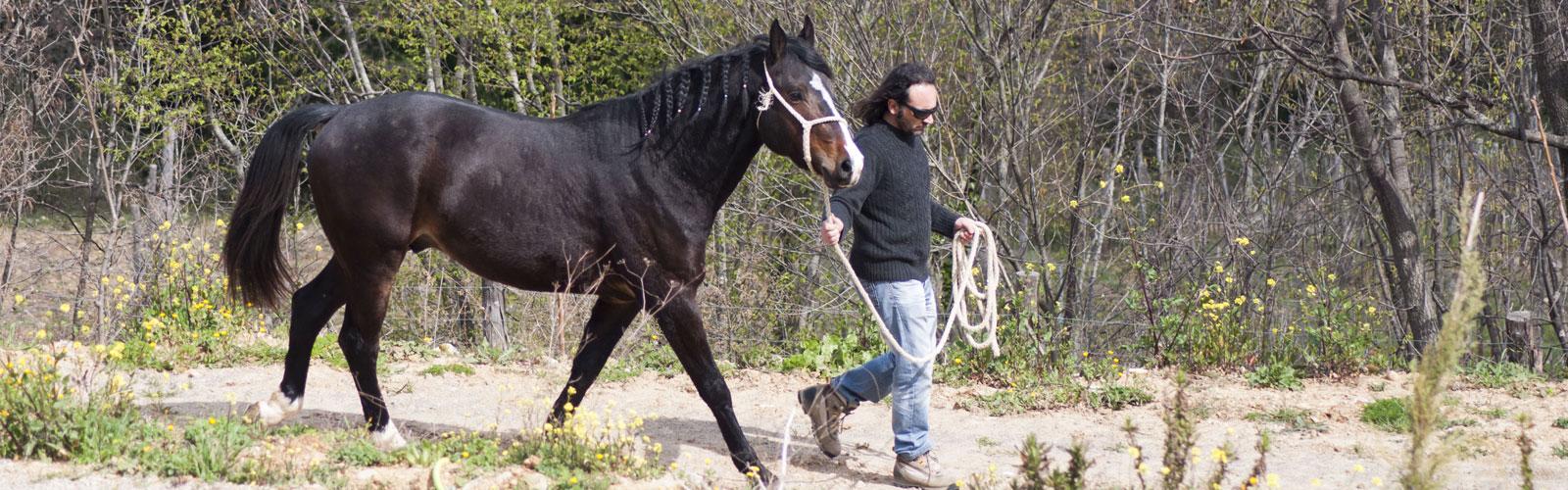 allevamenti cavalli maremmani in provincia di Grosseto